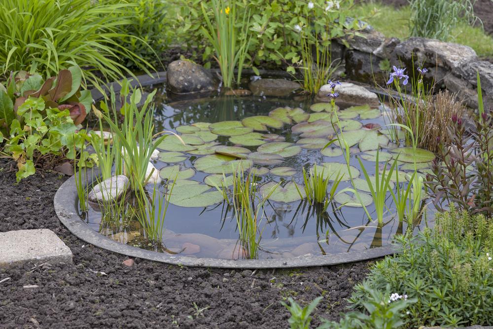 4 astuces pour entretenir un bassin de jardin